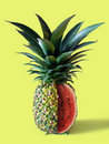 Pinemelon Stock Image
