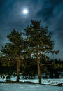 Pines at night in the woods. Moon night Royalty Free Stock Photo