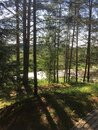 Mast pines, path to the pond. LV. Royalty Free Stock Photo