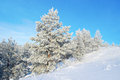 Pines snow covered on the mountain Stock Photography