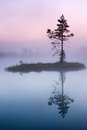 Pinetree on isle in a lake in a mist Stock Photo