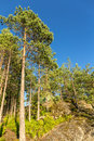 Pinewood sunny landscape in summer forest with rocks and sky Stock Photography