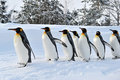 Pinguins Fotografia de Stock Royalty Free