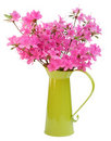 Pink azaleas in green jug Stock Images