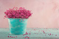 Pink baby s breath flowers on wooden background dried in a blue vase vintage Stock Images