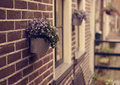 Pink beautiful flowers in pot on the brick wall of house near th Royalty Free Stock Photo