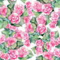 Pink begonia flower, watercolor, pattern seamless Royalty Free Stock Photo