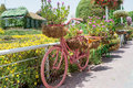 Pink bicycle decorated with colourful flowers in the pots Royalty Free Stock Photo