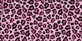 Pink and black leopard skin fur print pattern.