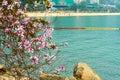 Pink blooming bauhinia in repulse bay the photo was taken hongkong china is hong kong s city flower Stock Image