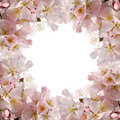 Pink blossom frame Royalty Free Stock Image