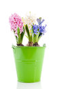Pink blue and white Hyacinths in green bucket Royalty Free Stock Photography