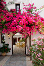 Royalty Free Stock Image Pink Bougainvillea
