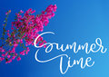 Pink bougainvillea against the sky and text Summer time. Calligraphy lettering hand draw Royalty Free Stock Photo