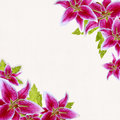 Pink bridal lilies border on white background Stock Image