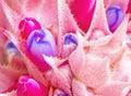 Pink bromeliad flower Stock Photos