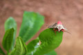 Pink Butterfly on a leaf. Royalty Free Stock Photo