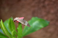 The Pink Butterfly on a leaf. Royalty Free Stock Photo