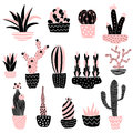 Pink cacti 2 in pots