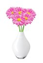 Pink chamomiles chrysanthemums in vase isolated on white Stock Photos
