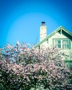 Pink cherry blossom near chimney of residential house in Seattle clear blue sky Royalty Free Stock Photo
