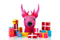 Pink christmas with many presents deer isolated over white background Stock Photos