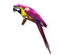 Pink colorful parrot isolated on white background Stock Image