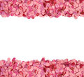 Pink confetti border Royalty Free Stock Photo