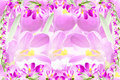 Pink crocus spring flower texture background for web design banner and other art work Stock Images