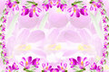 Pink crocus spring flower texture white background for web design banner and other art work Royalty Free Stock Image
