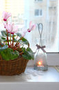 Pink cyclamen on a window in winter with vintage candlestick Stock Photography