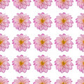 Pink dahlia flower in a repeated pattern Royalty Free Stock Photos