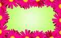 Pink daisies border over green Royalty Free Stock Photography