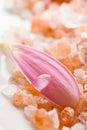Pink daisy petal Stock Photography