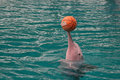 Pink Dolphin, Sentosa Royalty Free Stock Photo