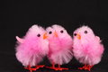 Pink easter chicks black background Stock Photos