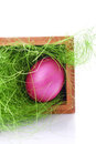 Pink easter egg basket green gras Stock Photography