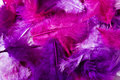 Pink feather Royalty Free Stock Photo