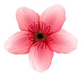 A pink five petal flower illustration of on white background Stock Image