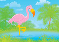 Pink flamingo Stock Photo
