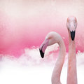 Pink flamingo background on old paper Royalty Free Stock Photo