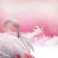 Pink flamingo background on old paper Royalty Free Stock Photos