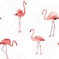 Pink flamingo birds rose flowers outline pattern