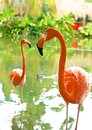 Pink flamingos beautiful flamingo standing on the shore of the pond Stock Image