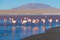 Pink flamingos at Royalty Free Stock Photo