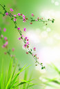 Pink floral and fresh grass Royalty Free Stock Photos