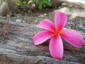 Pink flower bloom on log Royalty Free Stock Photography