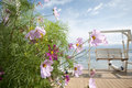 Pink flower and blue sea platform Royalty Free Stock Photos