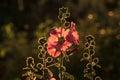 Pink Flower With Blurred Backg...