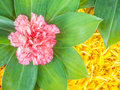 Pink flower decorated on marigold petal Royalty Free Stock Photography
